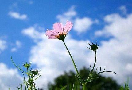 励志心情说说 生气是拿别人做错的事来惩罚自己